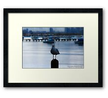 Loan Seagull Framed Print