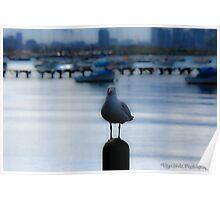 Loan Seagull Poster