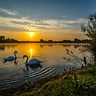 Swans at Bray Lake by LucyOlver