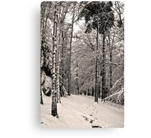 Snow Scene #5 Canvas Print