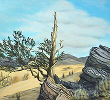 Bristlecone Pines by Carol & Colin Bedson