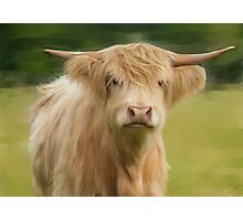 Oil and Chalk Painted Highland Cattle Photographic Print