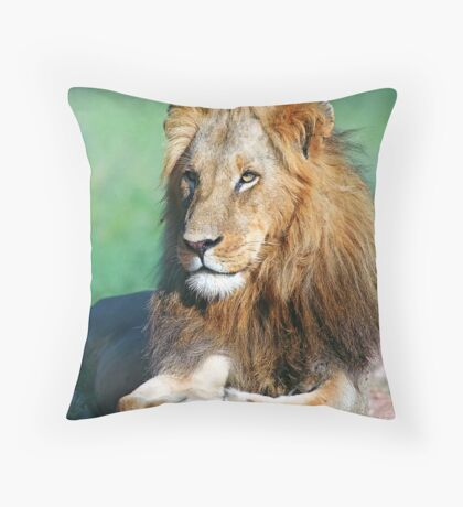 Young lion, South Africa Throw Pillow