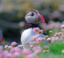 Puffin with flowers  by leksele