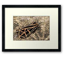 Patterns of Nature Framed Print