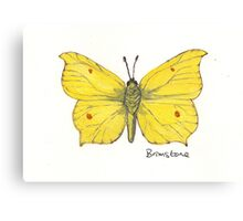 Brimstone butterfly. Canvas Print