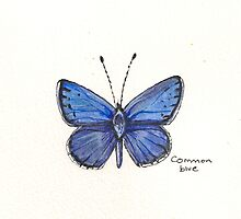 Common blue butterfly by Sam Burchell