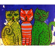 Three Kitties by Terri Holland Photographic Print