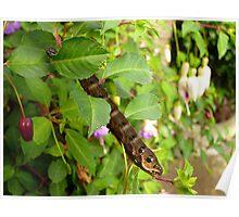 Elephant Hawk Moth Caterpillar Poster