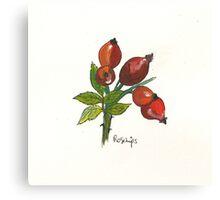 Rosehips Canvas Print