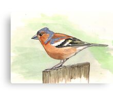 Male Chaffinch Canvas Print