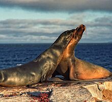 Seals by leksele