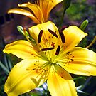 golden lillies by LoreLeft27