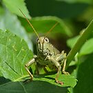 Grasshopper (iPad Case) by William Brennan