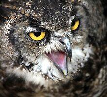 Great Horned Owl by John Dalkin