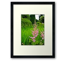 Soft Pink a midst The Lime Green Framed Print