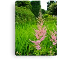 Soft Pink a midst The Lime Green Canvas Print