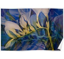 Watercolour: Freesias in Cobalt Poster