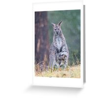 Wallabies in the rain, not a problem but Joey is getting big for the pouch Greeting Card
