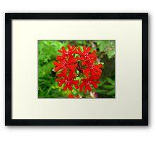Exotic Garden Red Framed Print