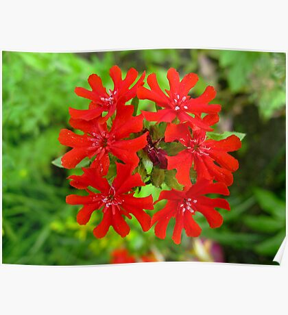 Exotic Garden Red Poster