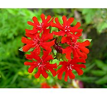 Exotic Garden Red Photographic Print