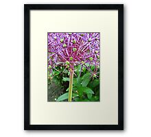 Spikey Lilac and Green Framed Print
