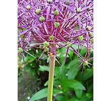 Spikey Lilac and Green Photographic Print
