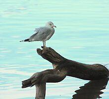 A very pretty seagull by Meghan1980
