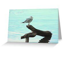 A very pretty seagull Greeting Card