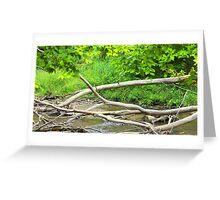 Pretty Creek  Greeting Card