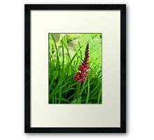 Lonely Red Flower Framed Print