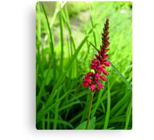 Lonely Red Flower Canvas Print