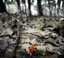Mushroom in the Woods by Carmen182