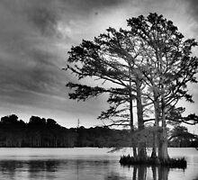 Cypress Tree by WeeZie
