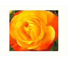 Yellow & Burnt Orange Rose Art Print