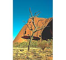 Lonesome Tree Photographic Print