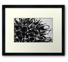 Nature 2 Framed Print