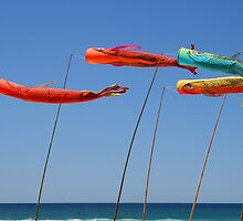"""Day 244 