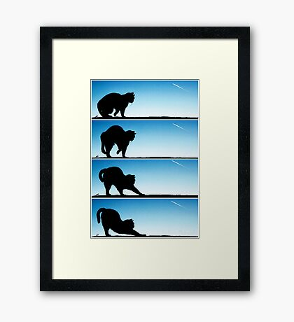 The life of a Cat... Framed Print