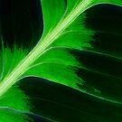 Tropical Leaf by Robyn Carter