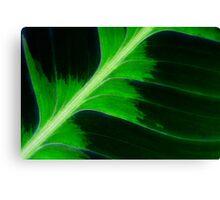 Tropical Leaf Canvas Print