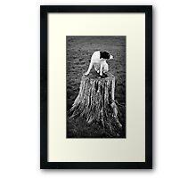 The watcher... Framed Print
