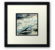 Bird in flight... Framed Print