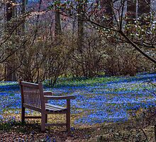 Contemplating Spring by Marilyn Cornwell