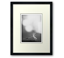 Fragile nature... Framed Print