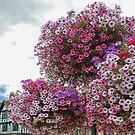 Hanging flower baskets by Arie Koene