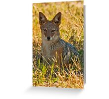 The eyes of the jackal Greeting Card