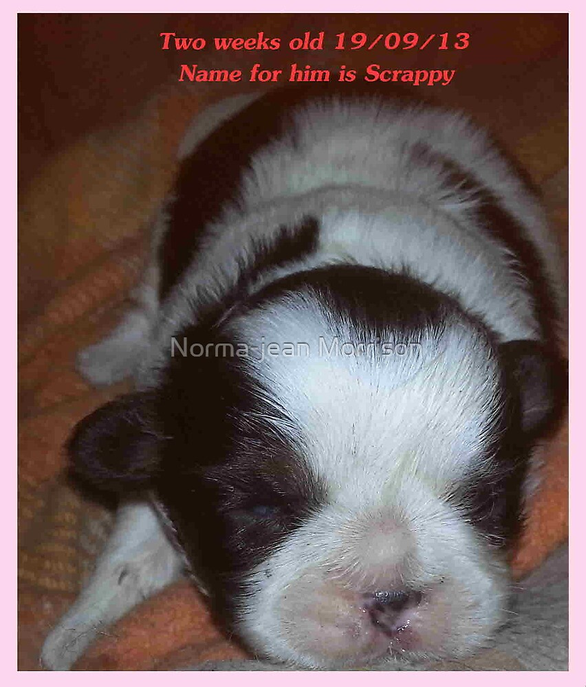 """A little one Scrappy born at farm "" by Norma-jean Morrison"