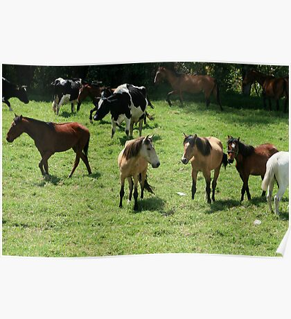 Cows and Horses in a Pasture Poster